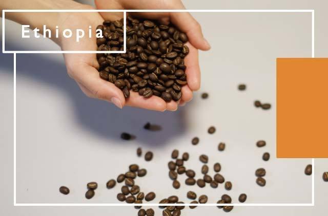 [エチオピア] 水素焙煎珈琲豆
