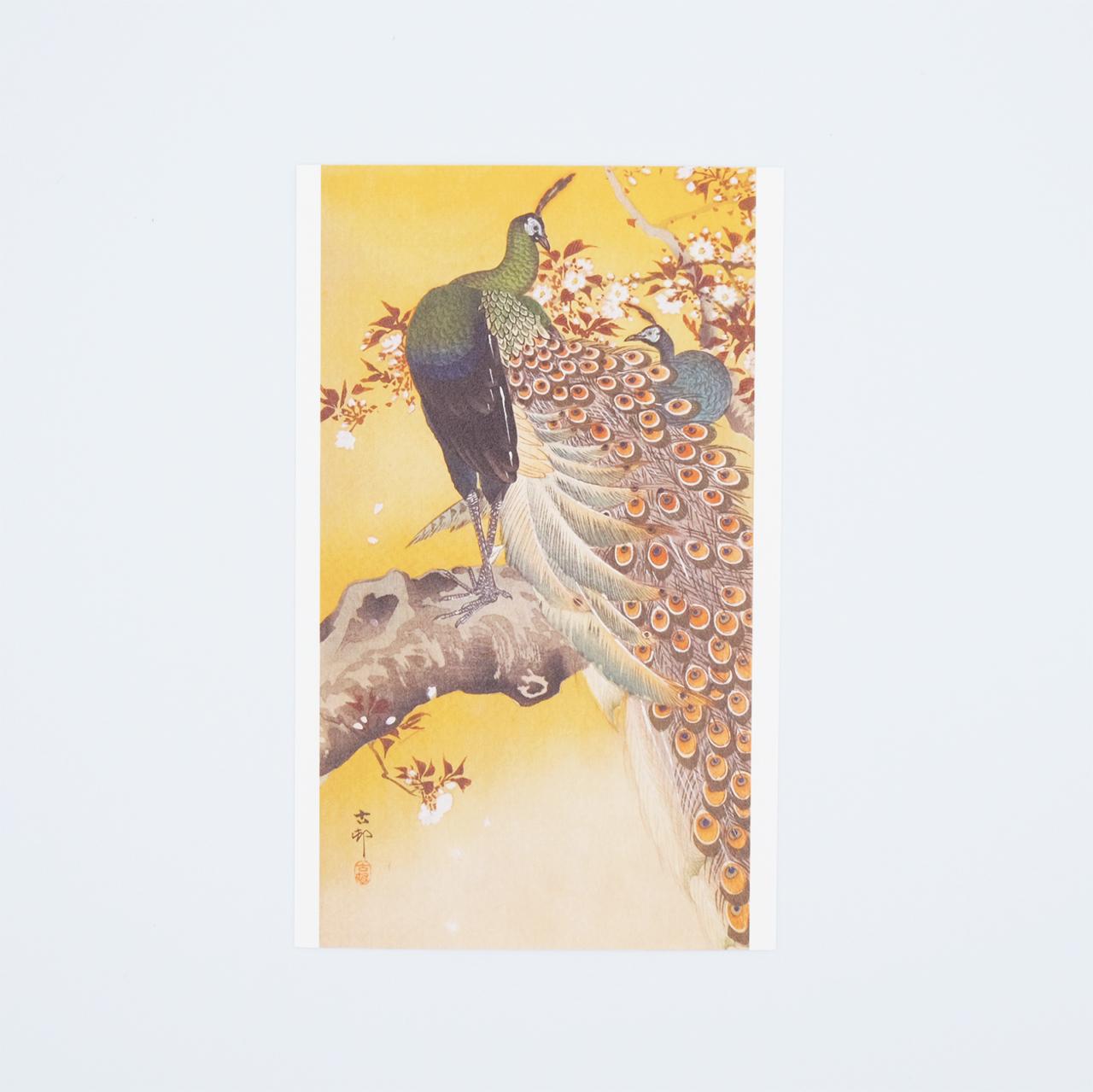 小原古邨ポストカード 桜につがいの孔雀