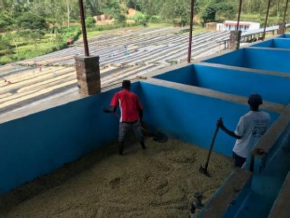 【500g】 ルワンダ カレンゲラ ~rwand karengera coffee washing station~