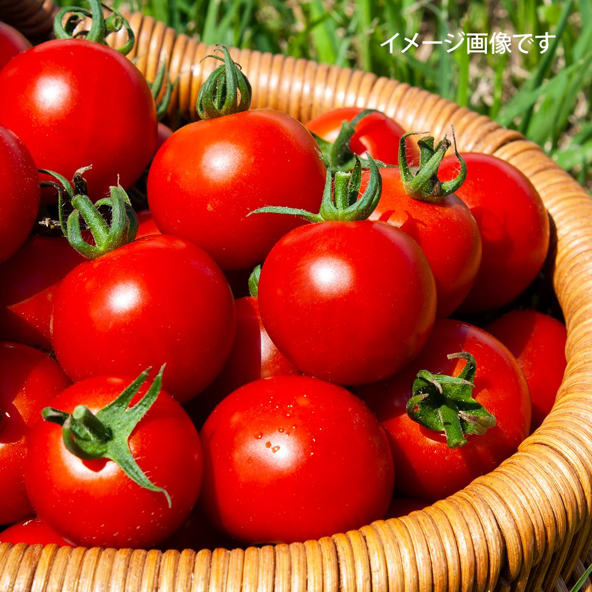 【期間限定】小泉農園厳選・美味トマトーミディ / 3Kg