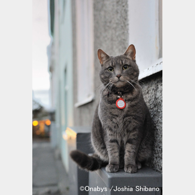No.11-サイズS『Cats in Reykjavik #1』