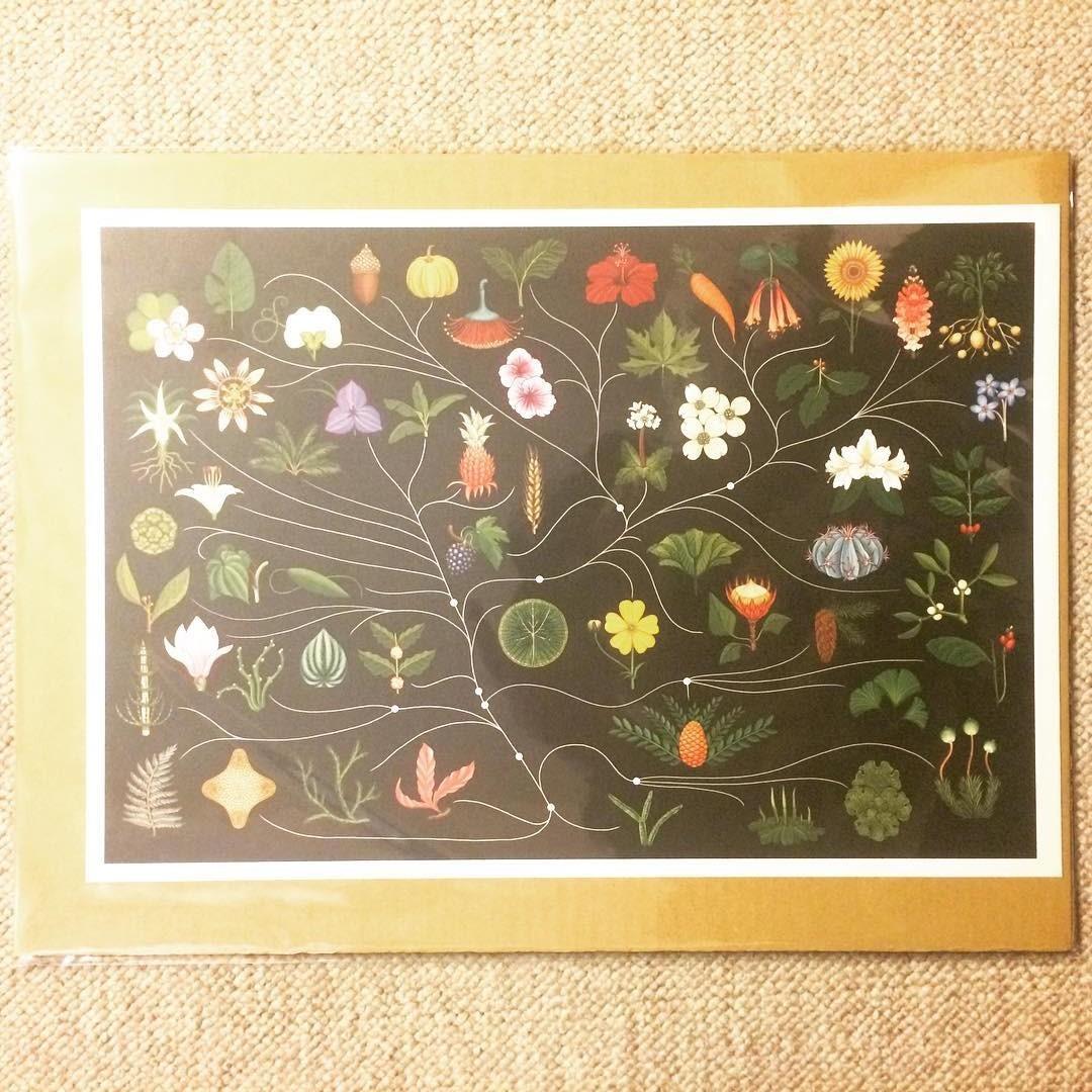 ミニ ポスター「植物画 ボタニカルアート 黒」 - 画像1