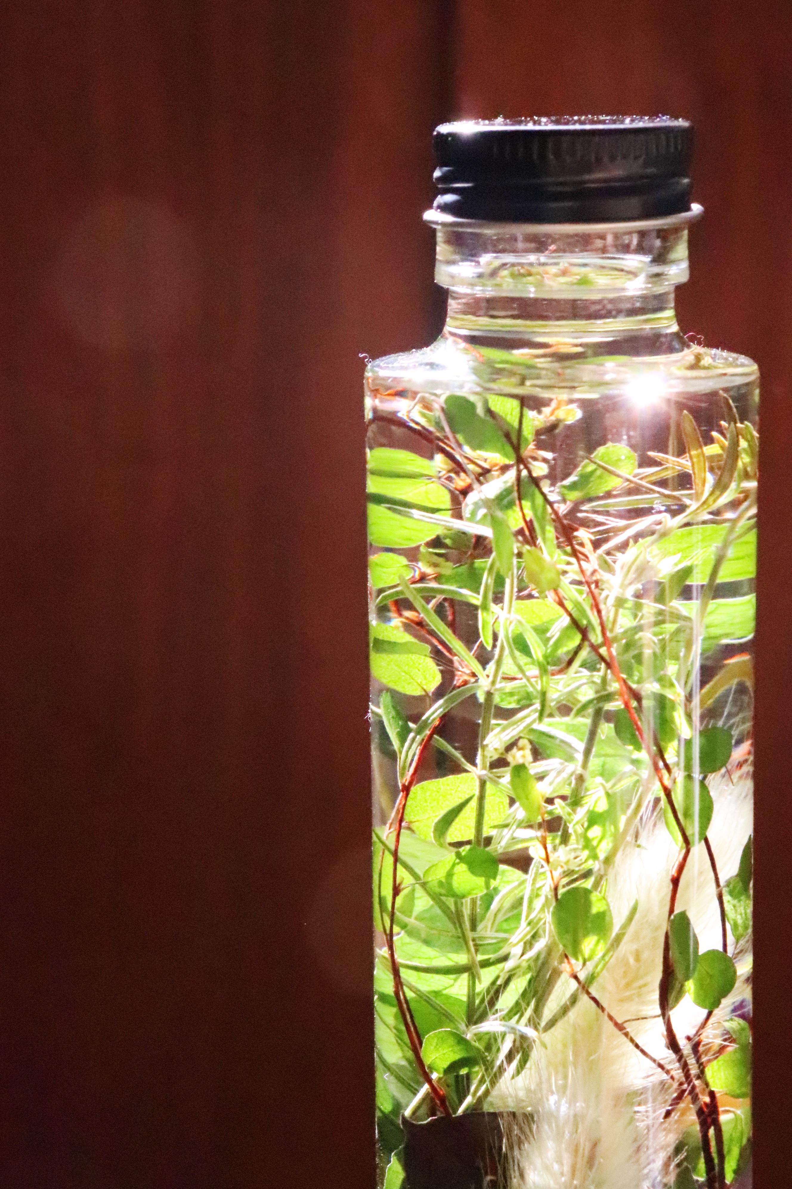 Herbarium22