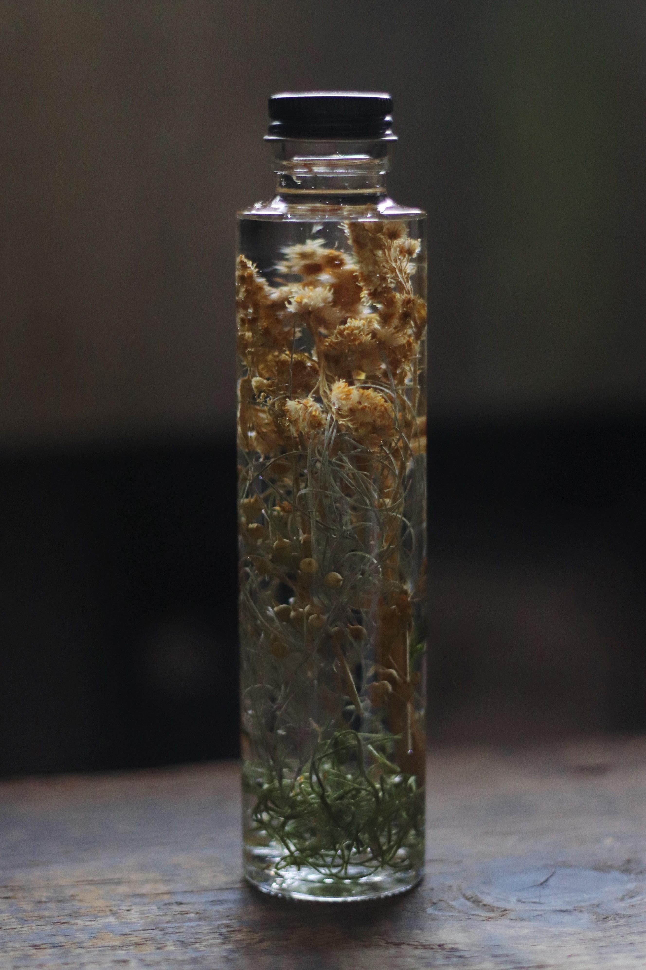 Herbarium8