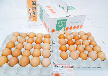 福地鶏の卵 50個セット(58g~70g)