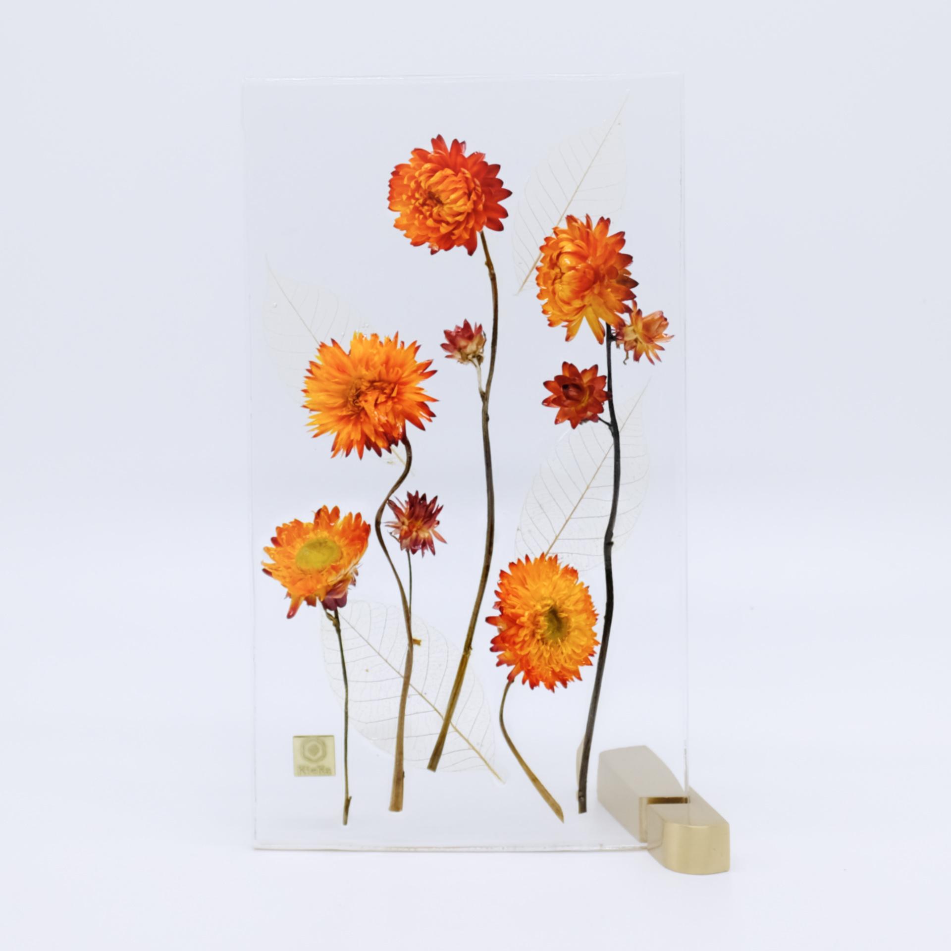 dried flower M ヘリクリサム オレンジ