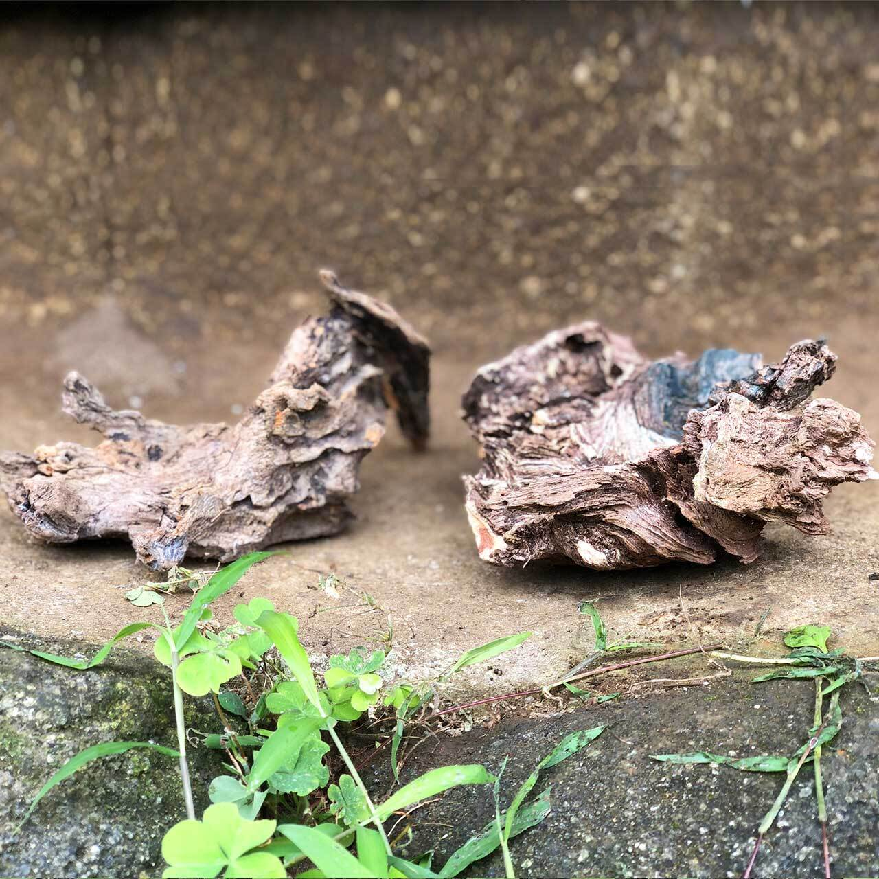 里山流木(中)