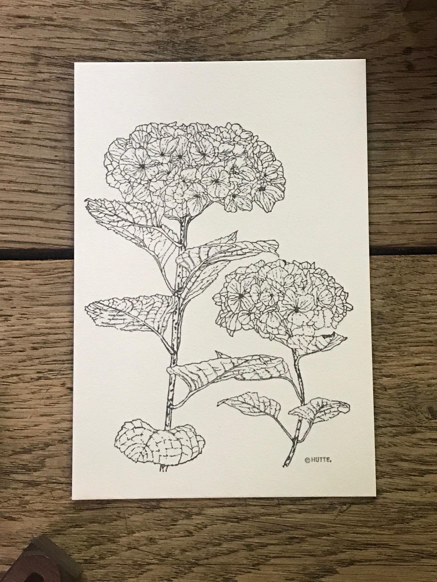 再入荷<HUTTE.>ボタニカルポストカード 紫陽花
