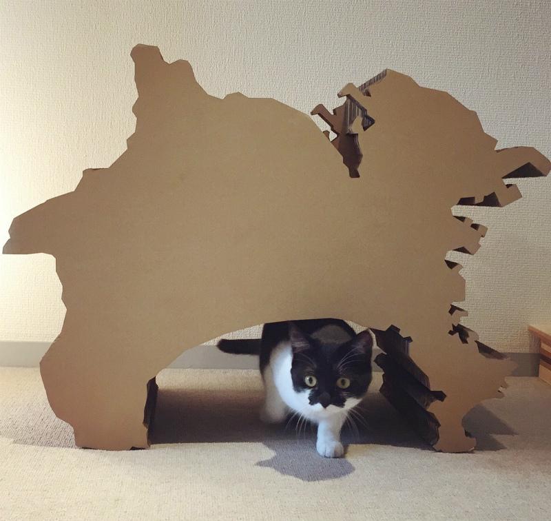 Cat Scratch House - KANAGAWA