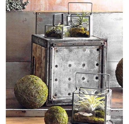 Roost Square Dry Terrariums 3個セット(S,M,L)