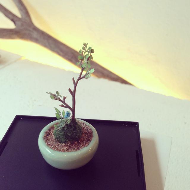 【THE BONSAI】丸鉢寄せ植え(水色)