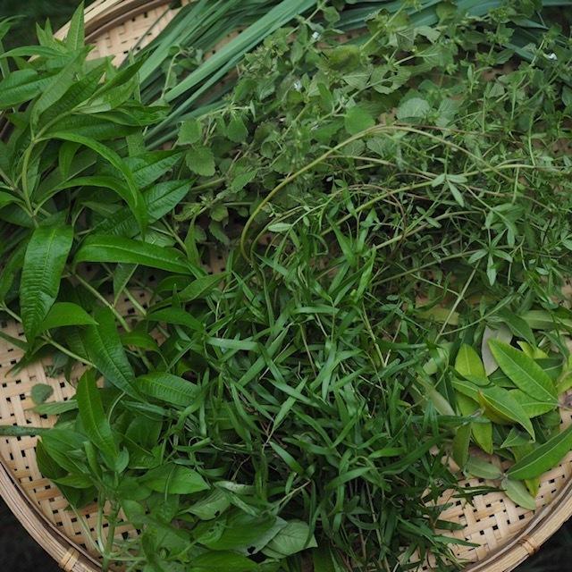 TEA from Our Farm   7 Lemon herbs
