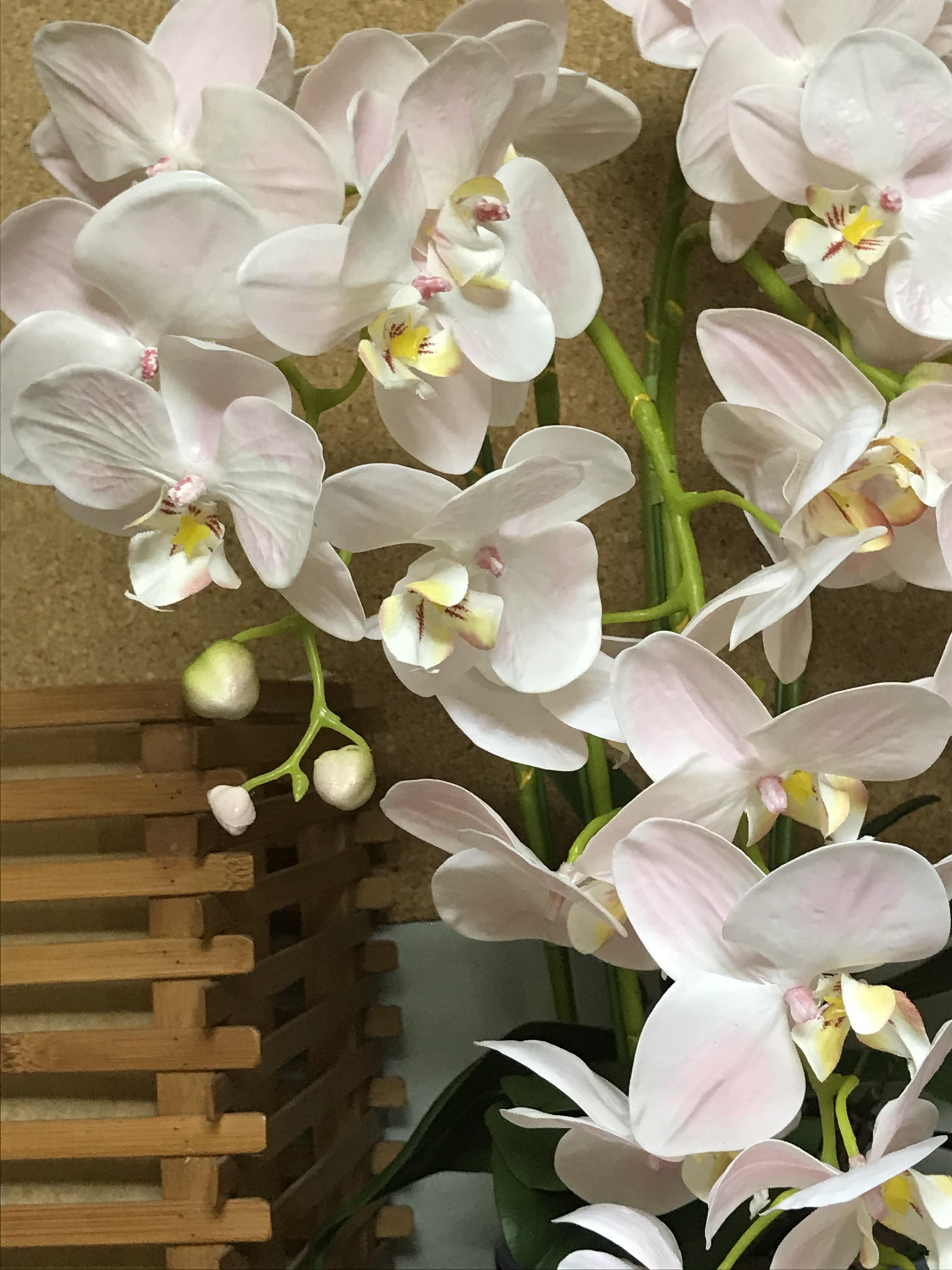 アーティフィシャルフラワー胡蝶蘭鉢植 5本立 L01