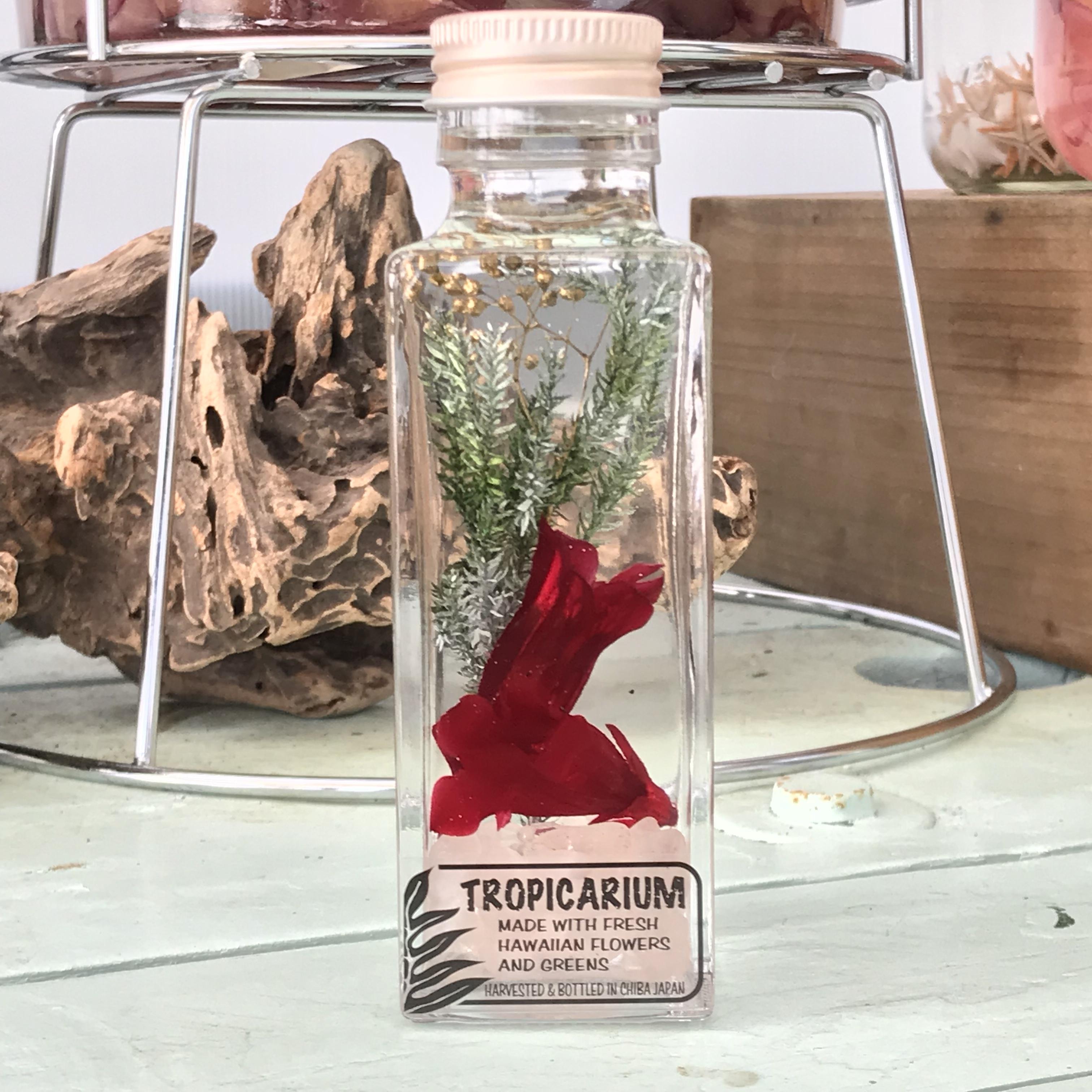 【Walohaなハーバリウム】幸福を呼ぶ星咲きリンドウのトロピカリウム クラシックレッド・紅水晶(スクエアボトル・プリザーブド・ローズクオーツ使用)