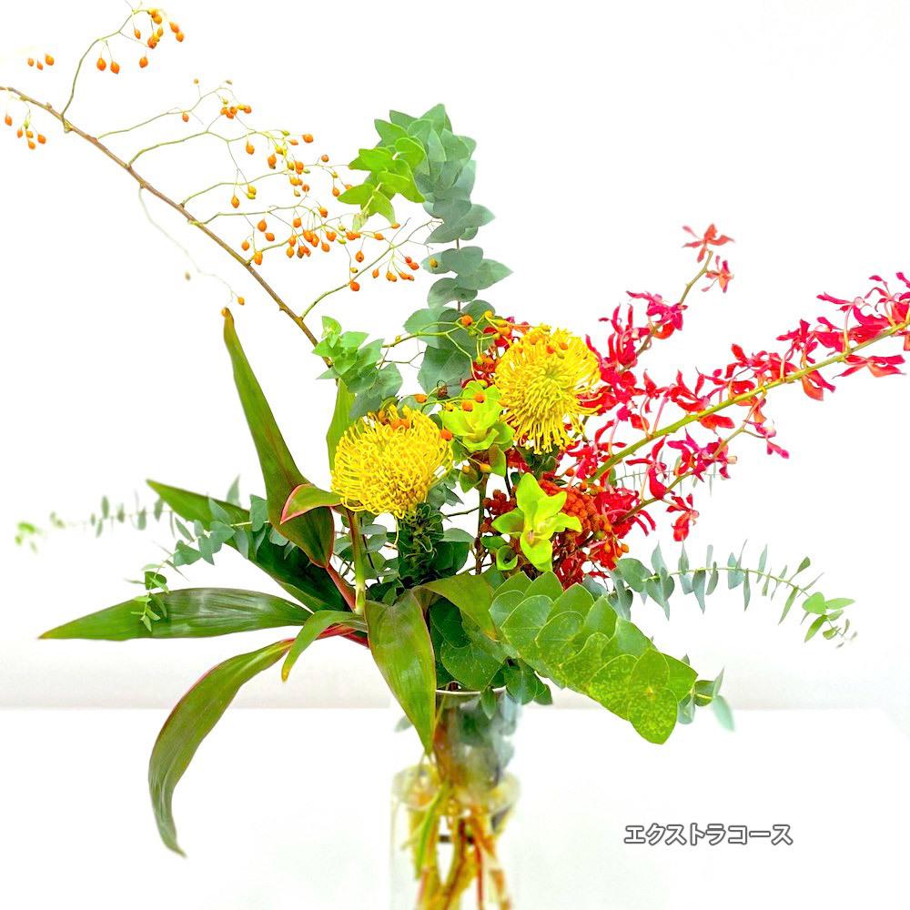 【定期便】月2回エクストラコース