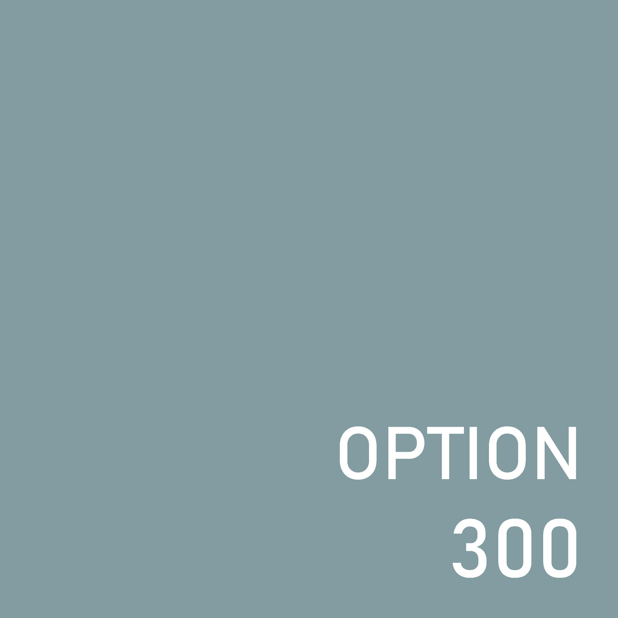 オプション300