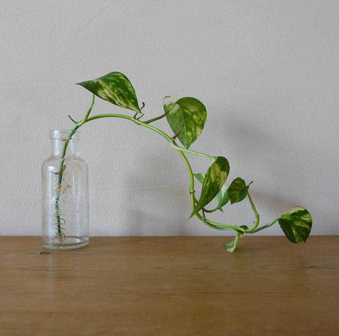 ぽってりとしたガラス瓶