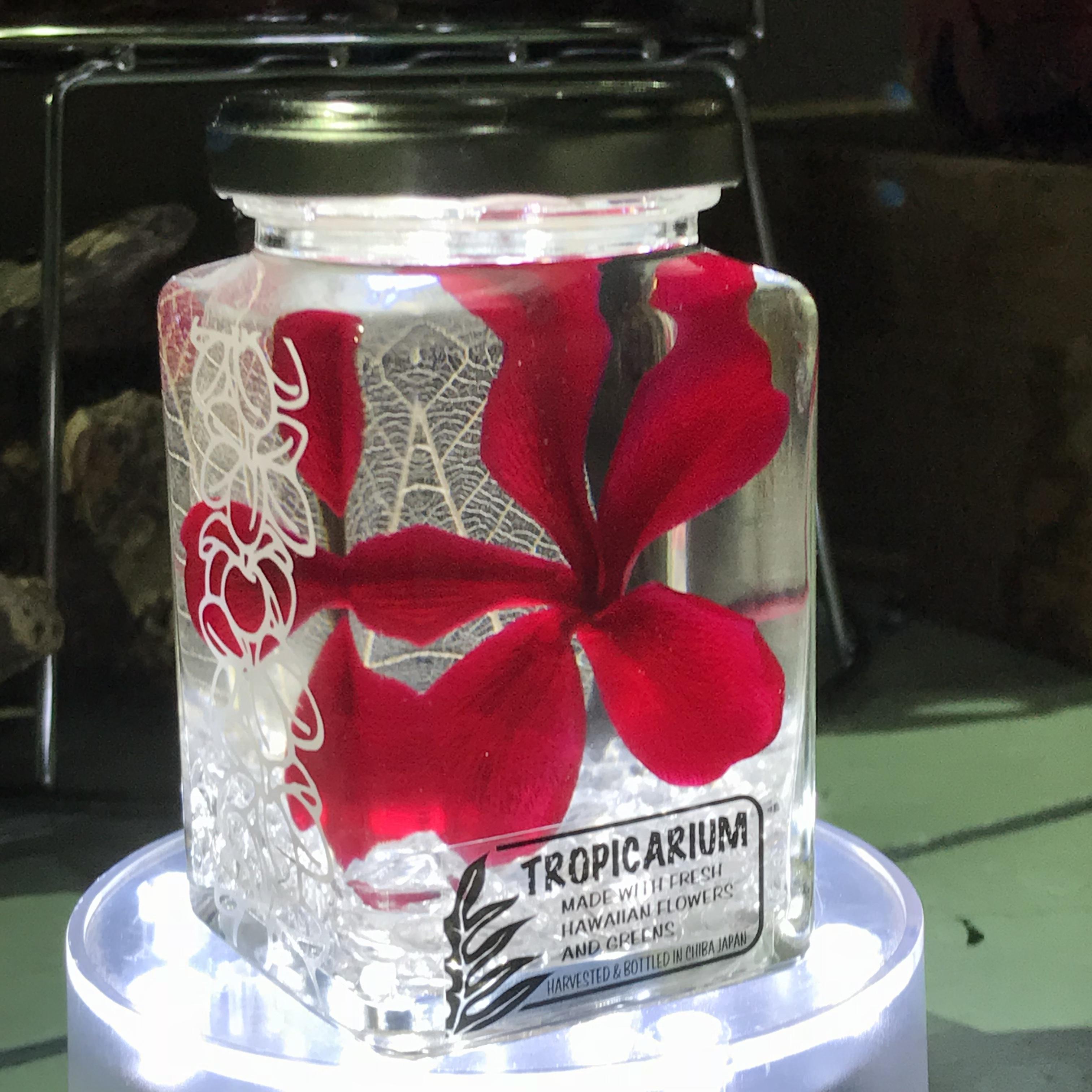 【Hawaiianpaint KANボトル】幸福を呼ぶプルメリアのトロピカリウム クラシックレッド・水晶(スタッキングボトル・プリザーブド・クリスタルクオーツ使用)