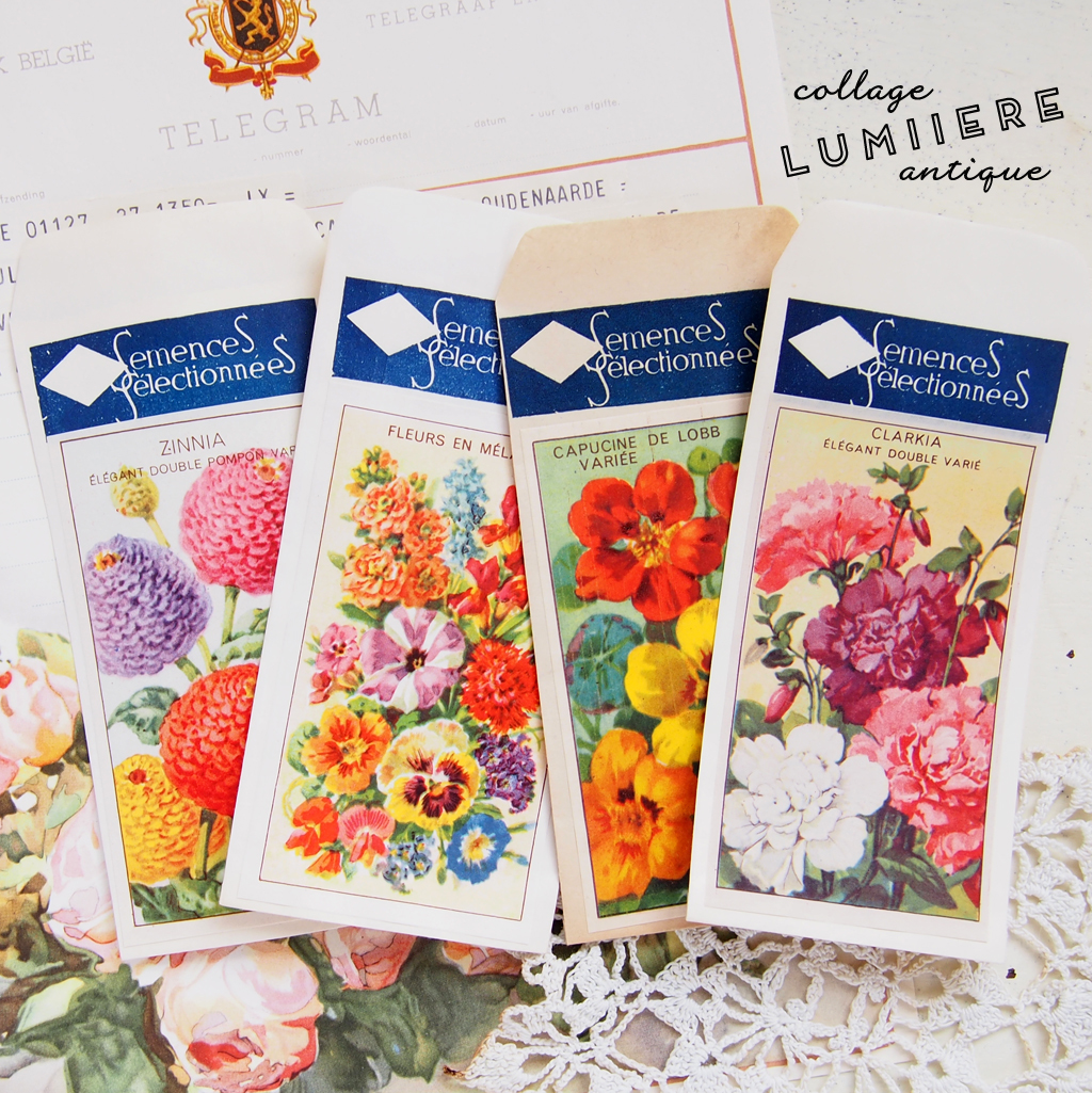 seed packet b