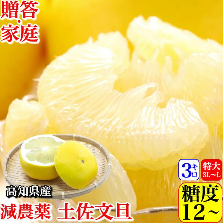減農薬 土佐文旦 約3kg 贈答・家庭用 2L-L  糖度12度 高知県産 小松さんの減農薬ブンタン  送料無料