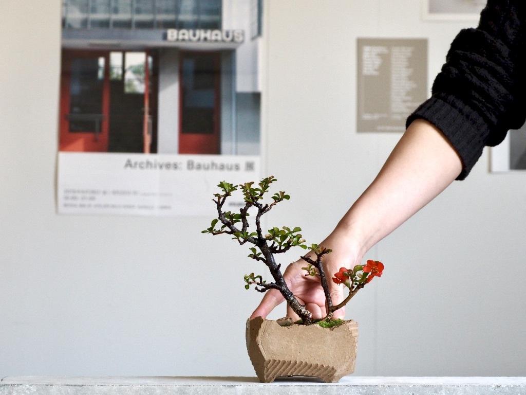 紅花長寿梅 と コルクイエロー 盆栽鉢 / SS / No,0217