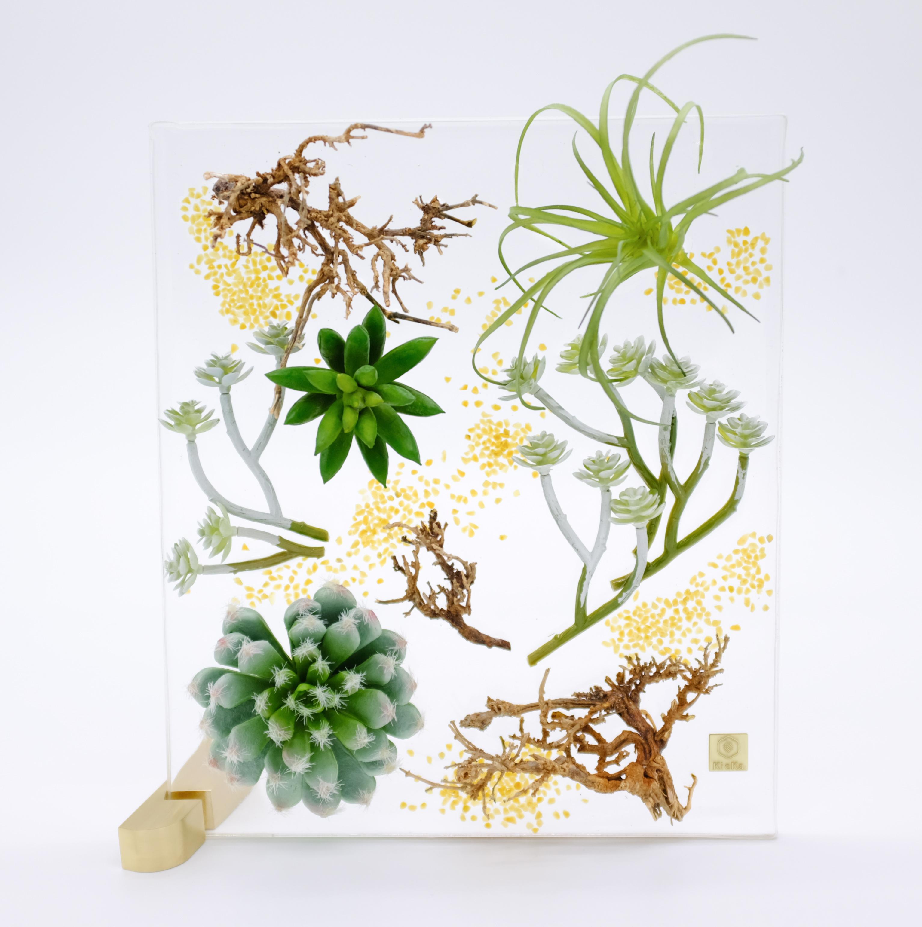 多肉植物 グリーンホワイト