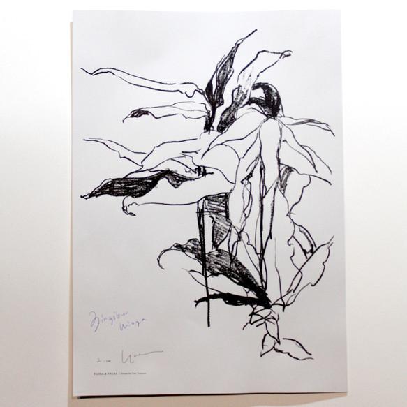 FLORA & FAURA 植物ドローイングポスター