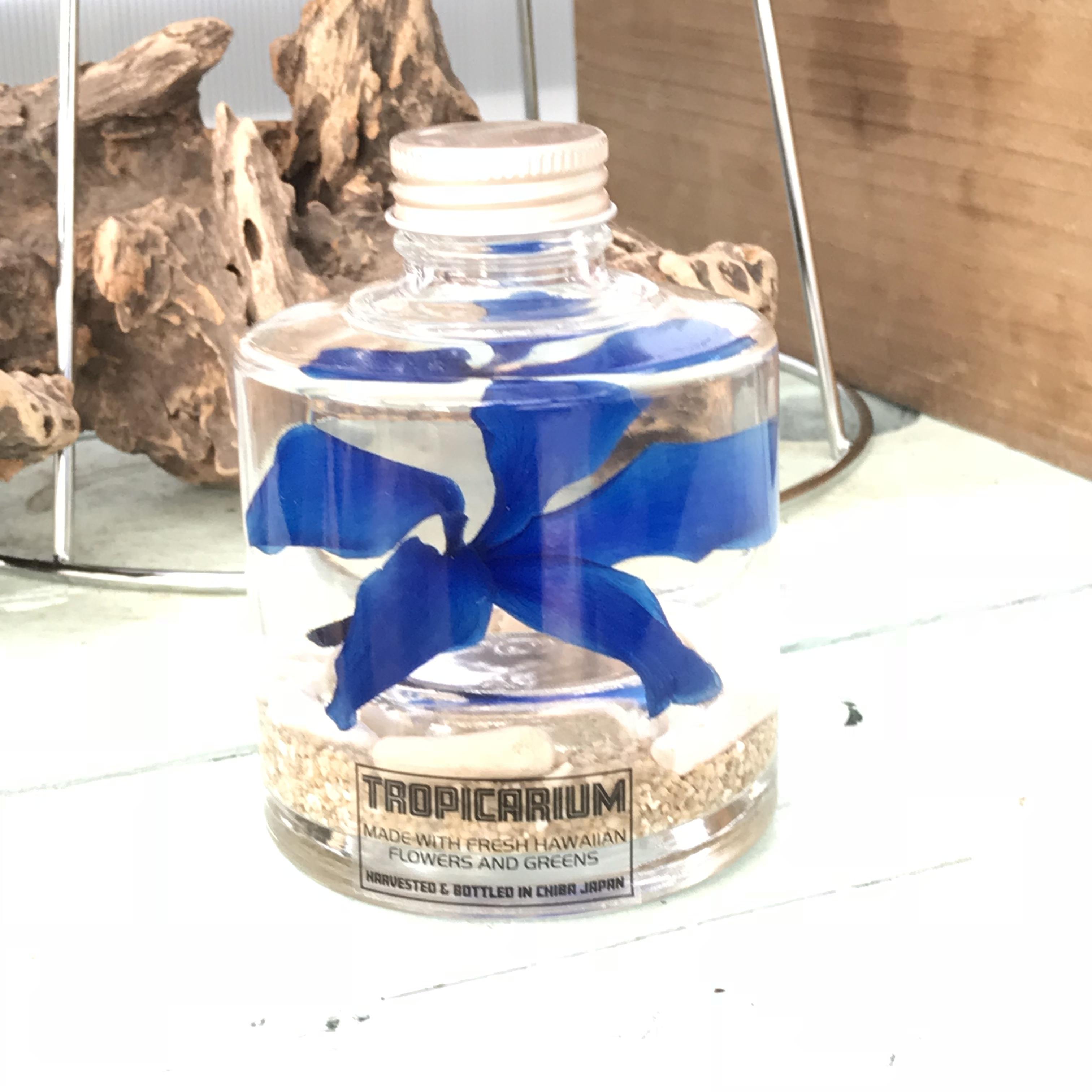 【ハワイアンなハーバリウム】プルメリアのトロピカリウム|サムライブルー(スタッキングボトル・プリザーブド)