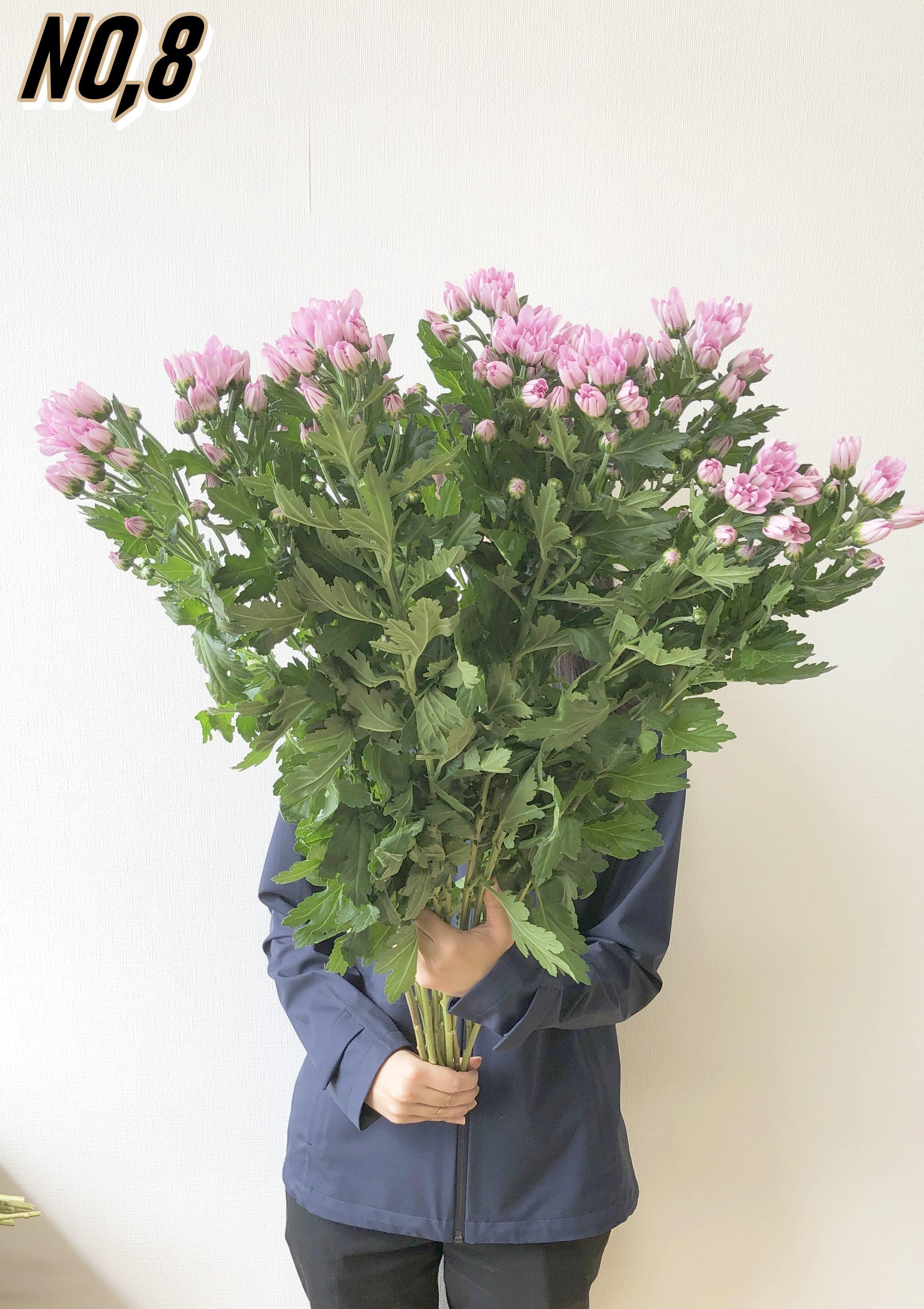 ★送料無料 お墓参りへ行こう!国産お供え花シェアBOX50 №1【ロスフラワー救済!】