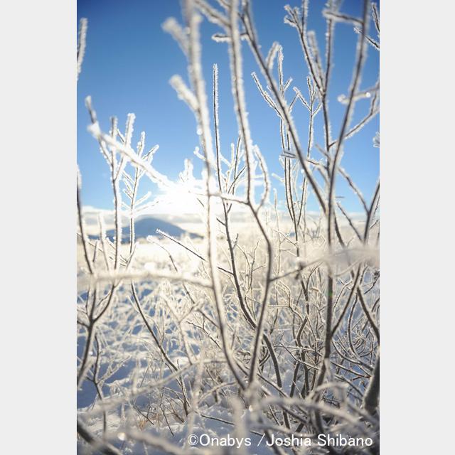 No.9-サイズM『Northern Snowfield #1』