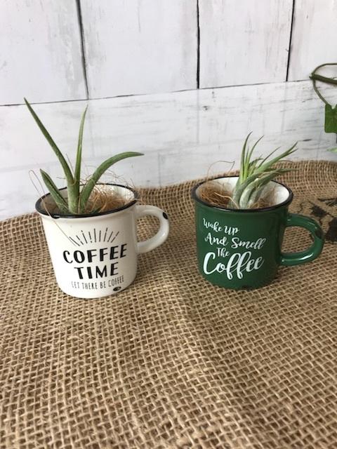 エアプランツ*コーヒーカップ*