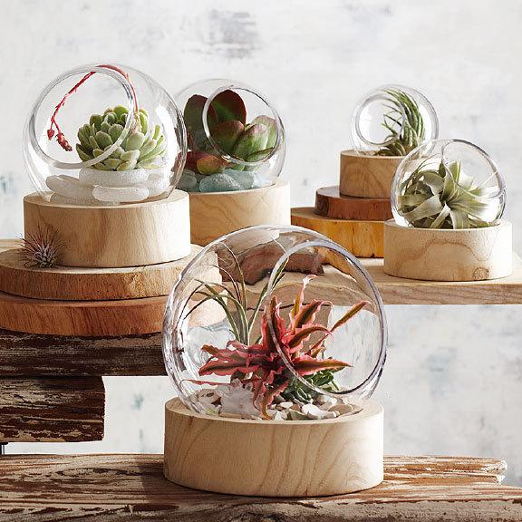 Roost ルースト Orbit Terrarium テラリウム ガラス鉢 x Wood L