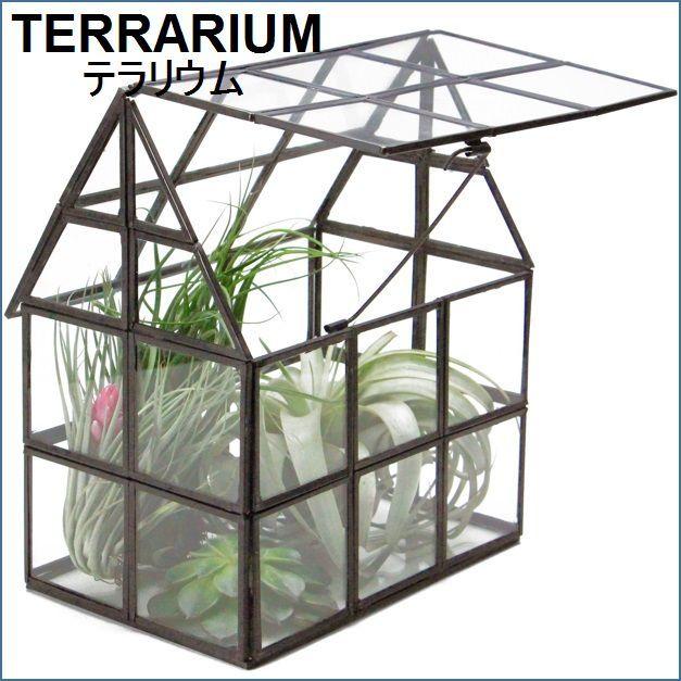 テラリウム用家型ガラスケース L【予約】