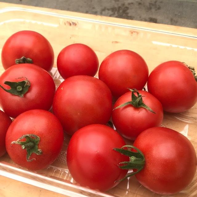 有機無農薬栽培 中玉トマト 500g ササベジ 送料無料