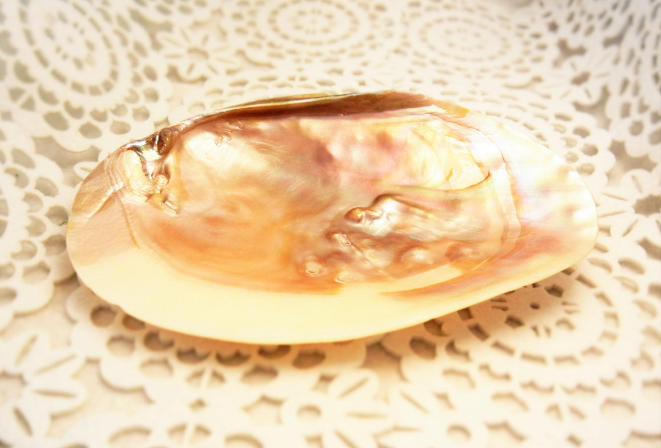 【浄化用品】お皿(シェルプレート)