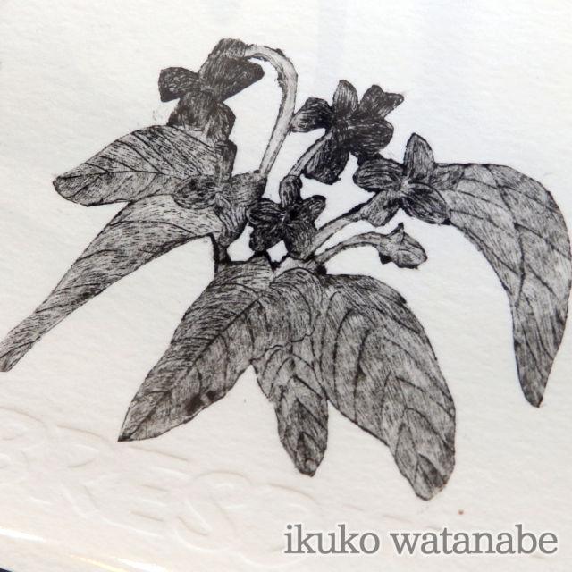 版画カード - スミレ - わたなべいくこ - no7-wat-01