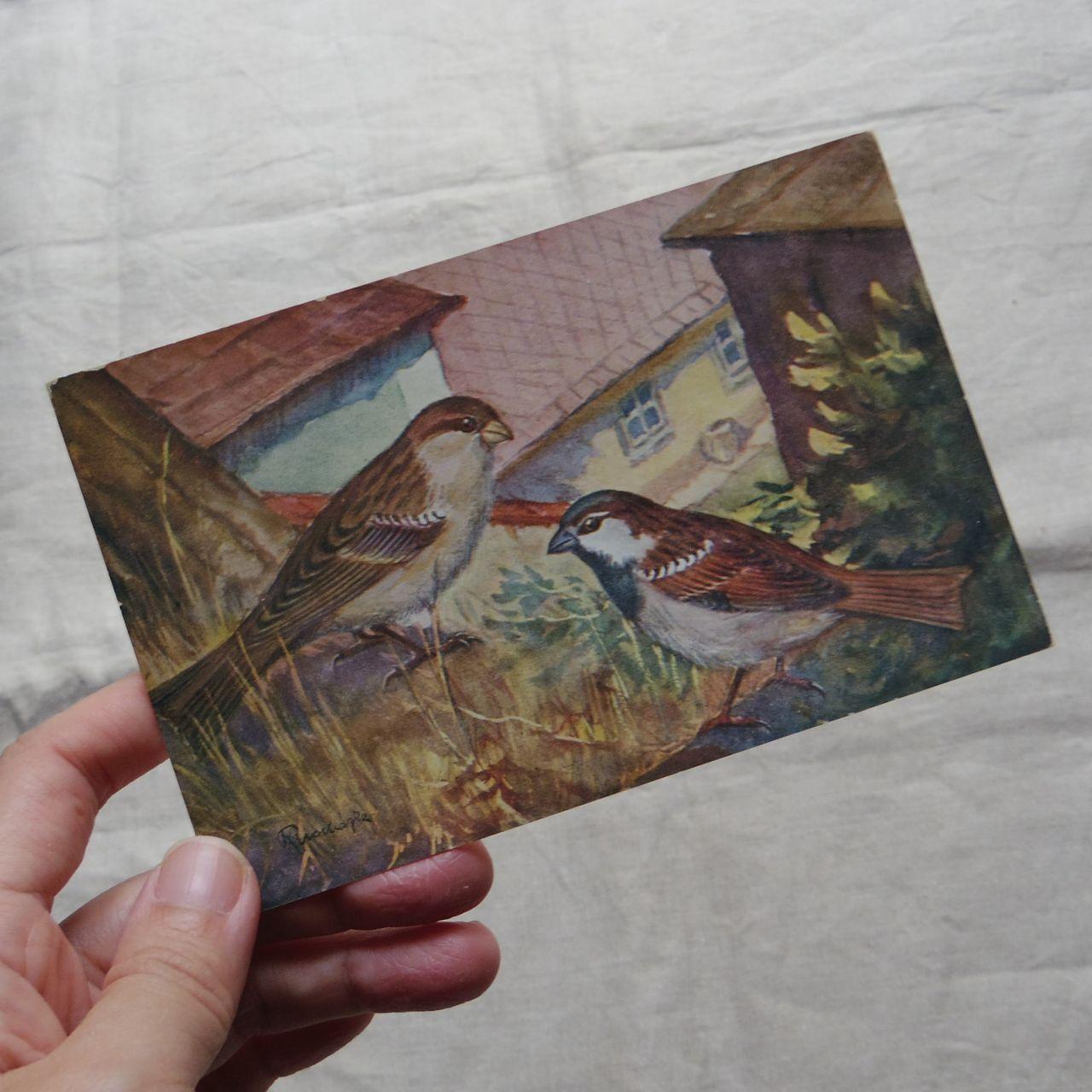 #エア蚤の市 鳥の絵のポストカード④