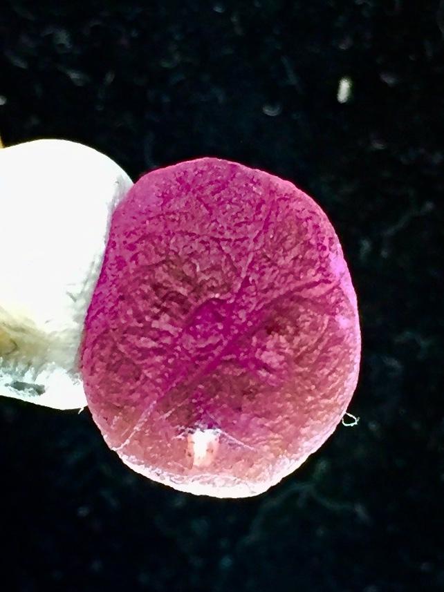 3) 「紫ゴビアゲート・卑弥呼・ビーズ」2021・人生応援価格
