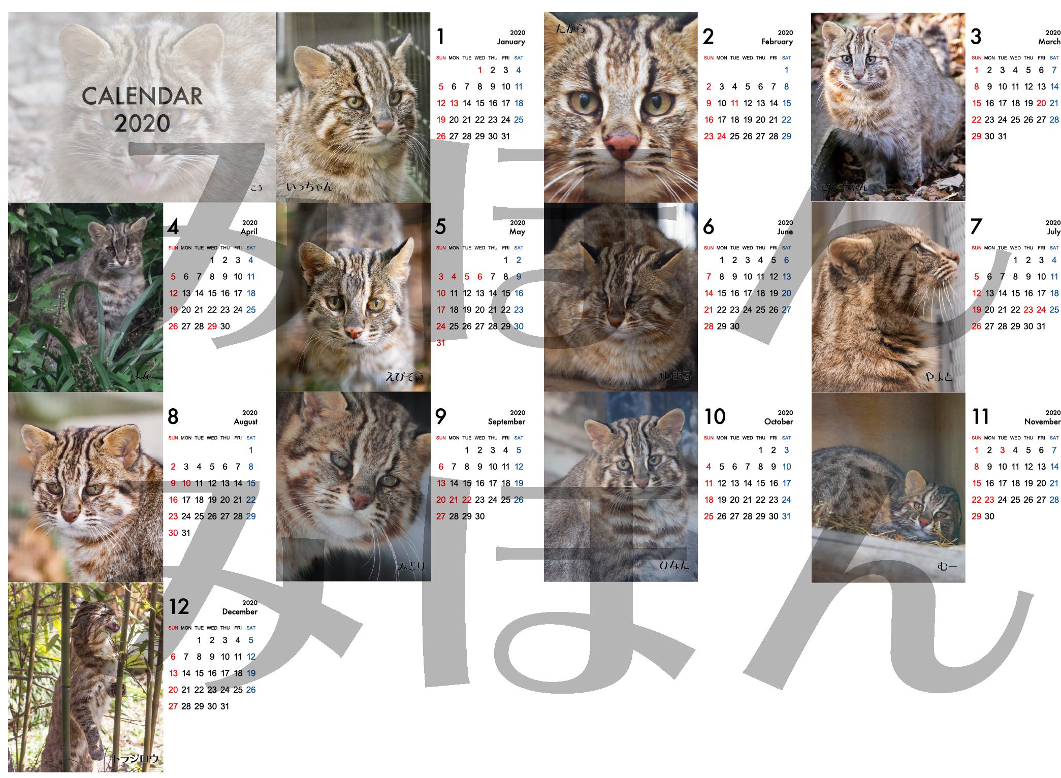 2020年ねこりんツシマヤマネコ卓上カレンダー