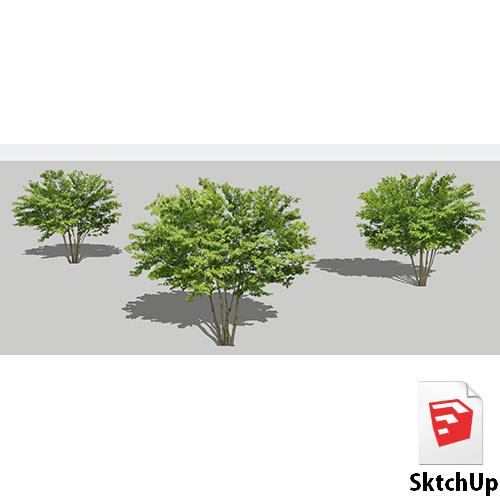 樹木SketchUp 4t_002 - 画像1