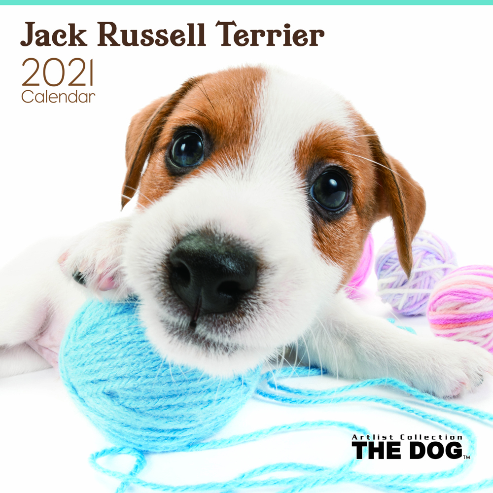 2021年 THE DOGカレンダー【大判サイズ】ジャック・ラッセル・テリア