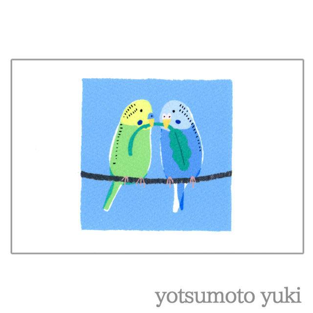ポストカード - セキセイインコ - ヨツモトユキ