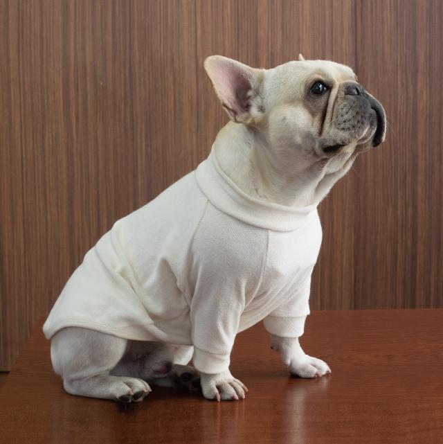 【綿のめぐみ】 長袖TシャツL~LL(フレンチブルドック用)