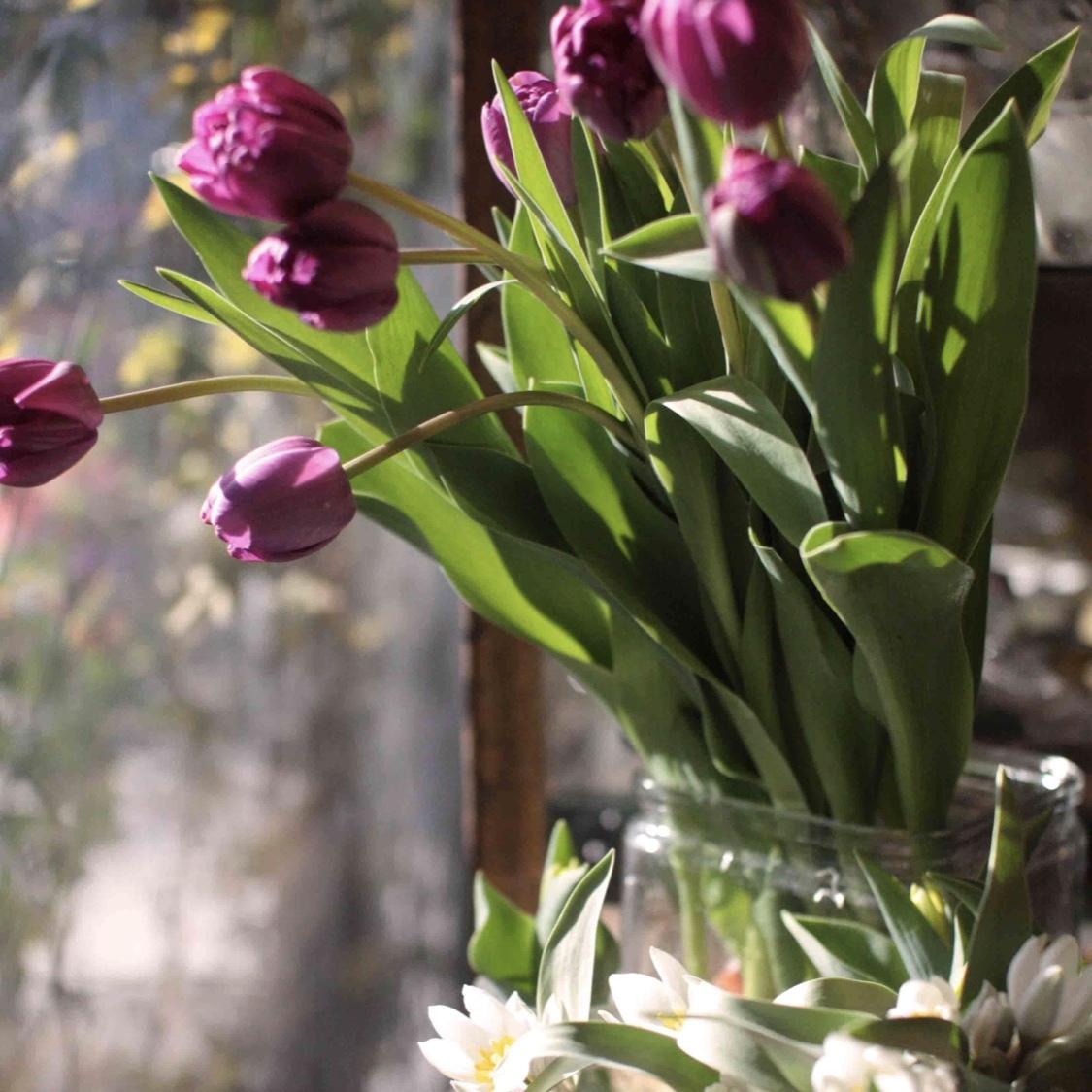 Fleurs de saison (季節の花*定期便 1か月2回)