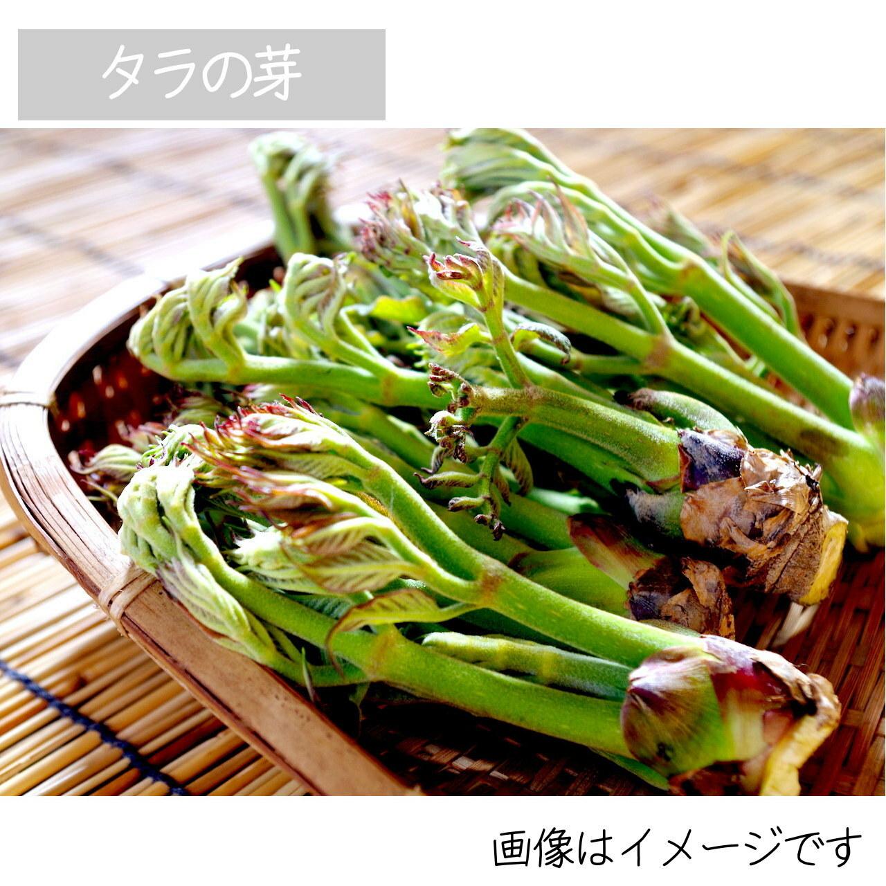 山菜 タラの芽 約50g 5月の朝採り直売野菜 5月9日発送予定