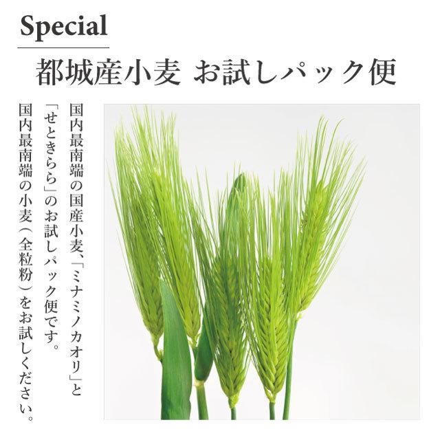 【送料無料】都城産小麦 (全粒粉)お試しパック便