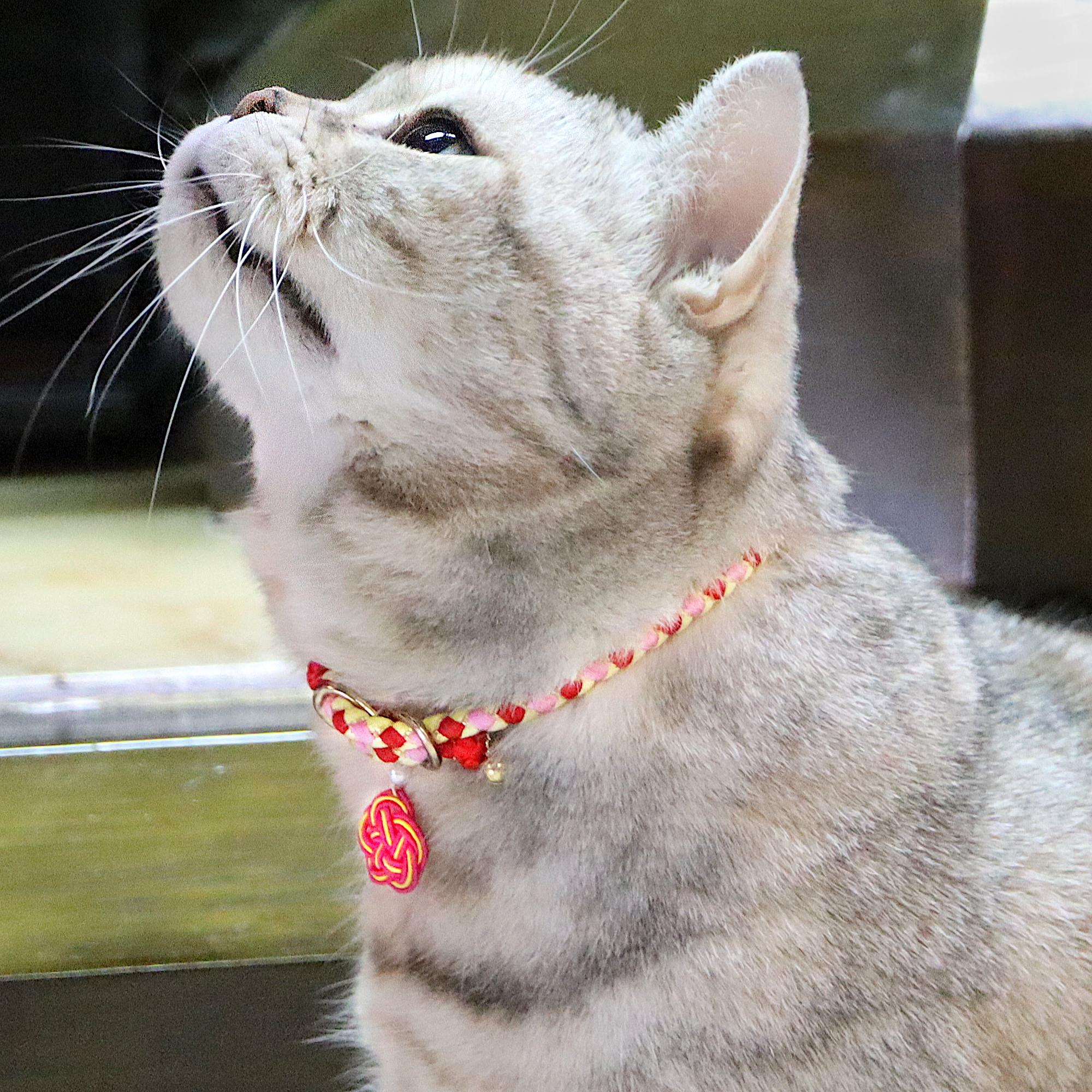 Carnation【ペア】組紐ブレスレット&猫首輪 ペアセット