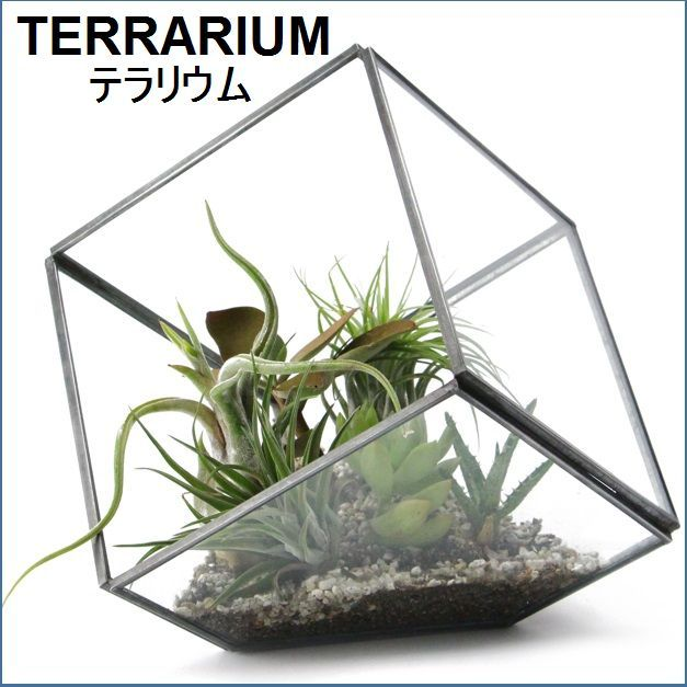 テラリウム用ガラスケース L【予約】