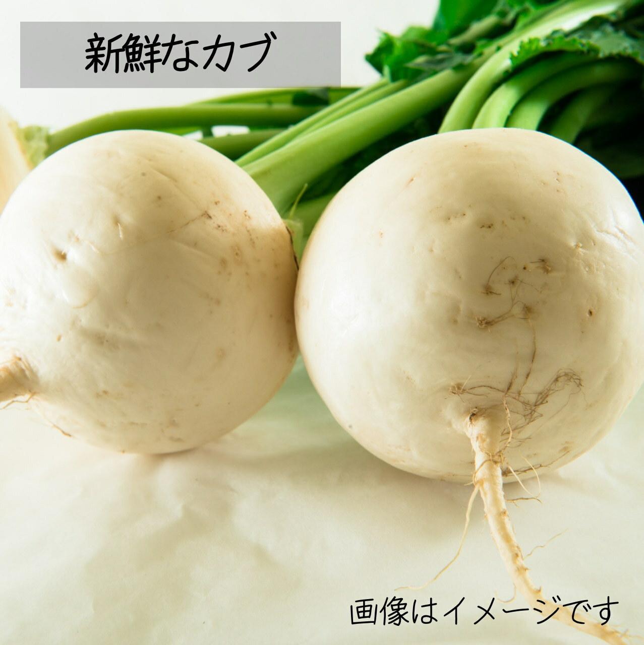 新鮮な秋野菜 : カブ 約3~4個  11月の朝採り直売野菜 11月9日発送予定