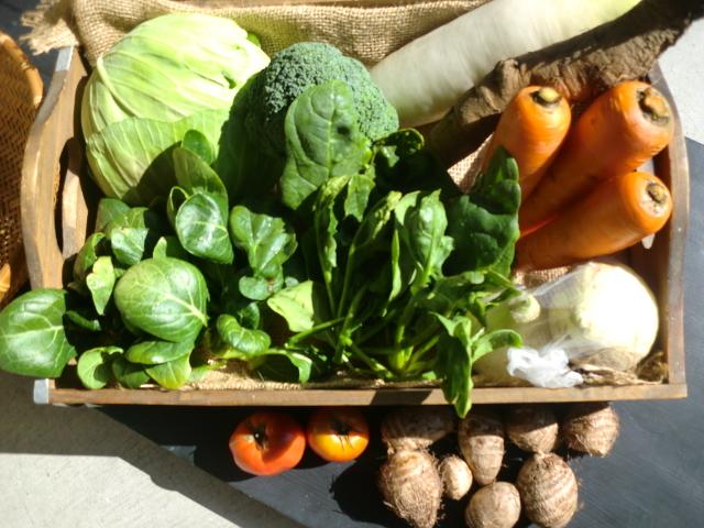 フィールの無農薬野菜定期宅配セット 隔週1回お届け3回分 送料1回500円
